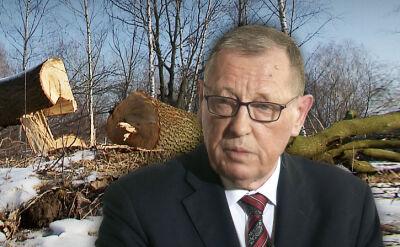 Znalezione obrazy dla zapytania masowa wycinka drzew tokis