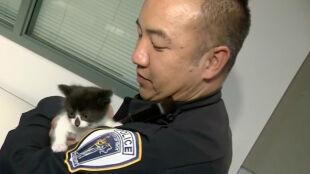 Kot wstępuje do policji.  Puchatych funkcjonariuszy może być jednak więcej