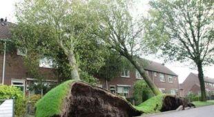 Zniszczenia po orkanie w Holandii
