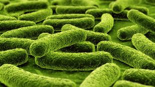 Dwa grzyby z toksycznej kopalni. Połączone mogą ochronić nas przed groźnymi chorobami